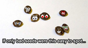 Uh oh...these are definitely some bad cannabis seeds...