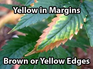 Marijuana Nutrient Problems Amp Symptoms By Picture Grow