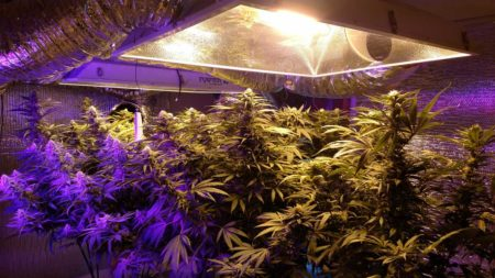 When you're using high-powered grow lights like HPS and LED, it's important to protect your eyes if you're spending a lot of time in the grow room!