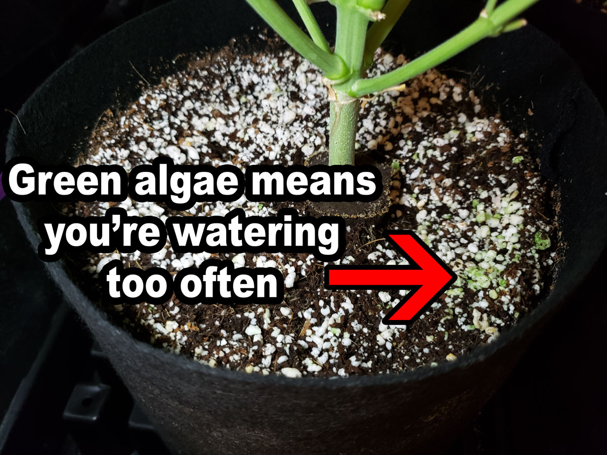 How Often to Water Coco Coir | Grow Weed Easy