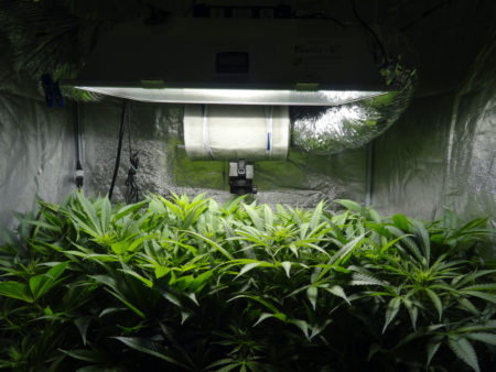 If leaves are pointing up, it is often a sign that the grow light is too close