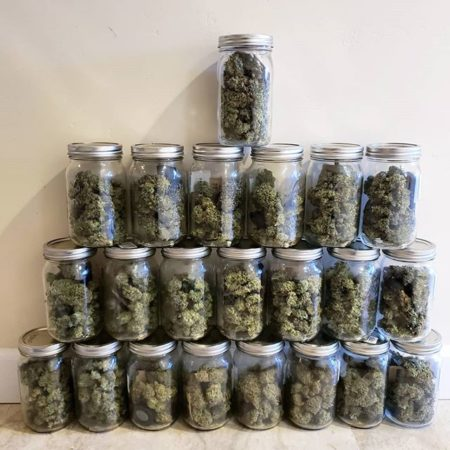 How to Produce a Ton of Weed with Only 1-4 Plants