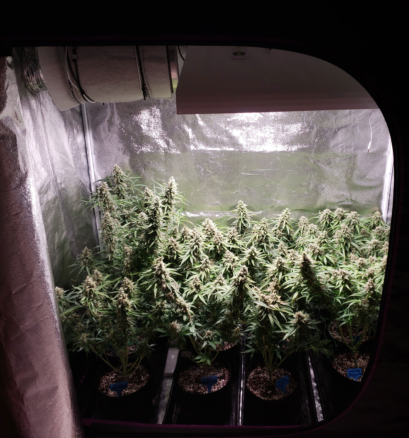 Are Lec Grow Lights Good For Growing Cannabis Grow Weed