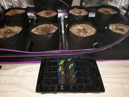 Time to install the seedlings into pots