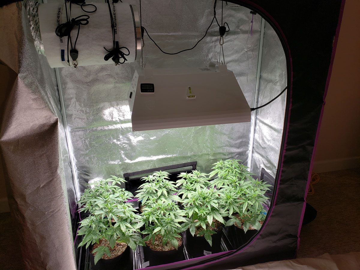 How To Grow Up To A Pound Of Cannabis With A 315 Lec Grow