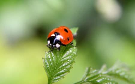 A super cute ladybug