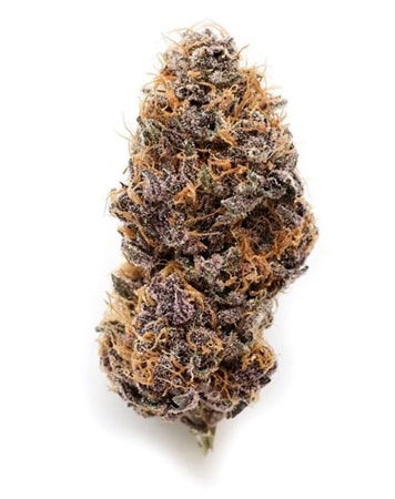 Purple Star Pupil bud from Mass Medical Strains