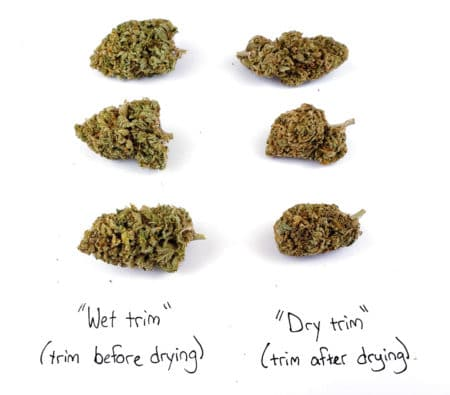 Creme de la Chem - Difference between trimming before and after drying