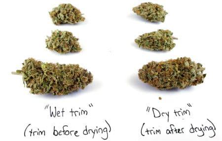 Dry trim vs wet trim buds (CInderella Jack strain)