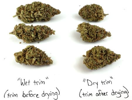 Forum Stomper - Difference between trimming before and after drying