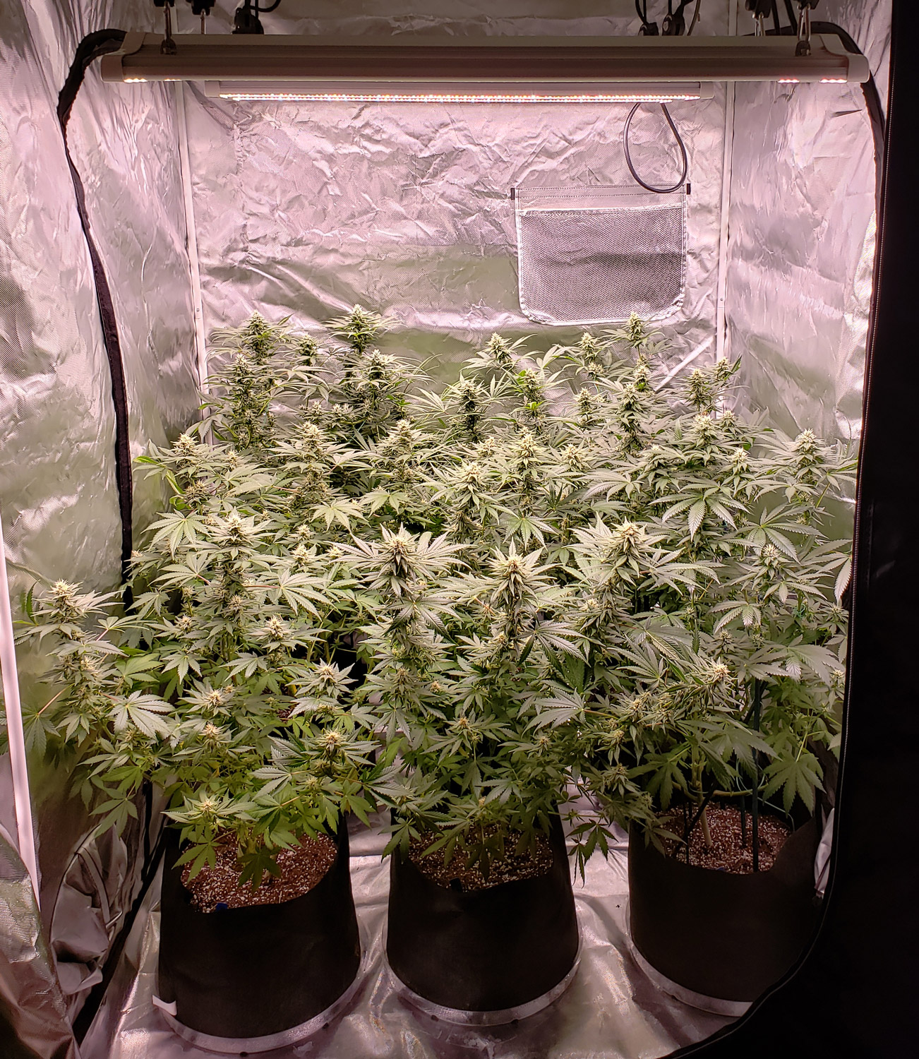 Harvest Over a Pound in a Large Grow Tent | Grow Weed Easy