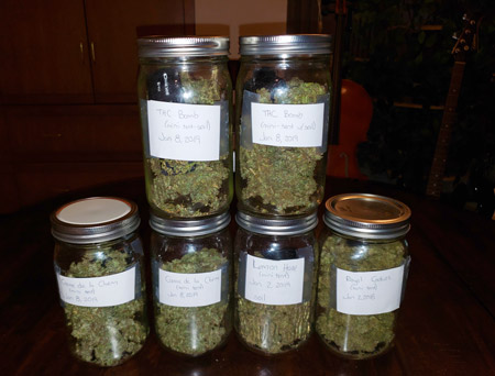 First harvest from the mini tent (in jars)