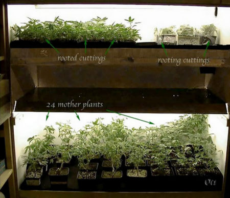 This double deck box is used for cloning, mother plants, and father plants