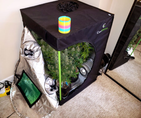 Example of Nebula's Microgrow - this mini grow tent was 2'x2'x3' with 4 autoflowering plants and used a HLG 100 LED grow light