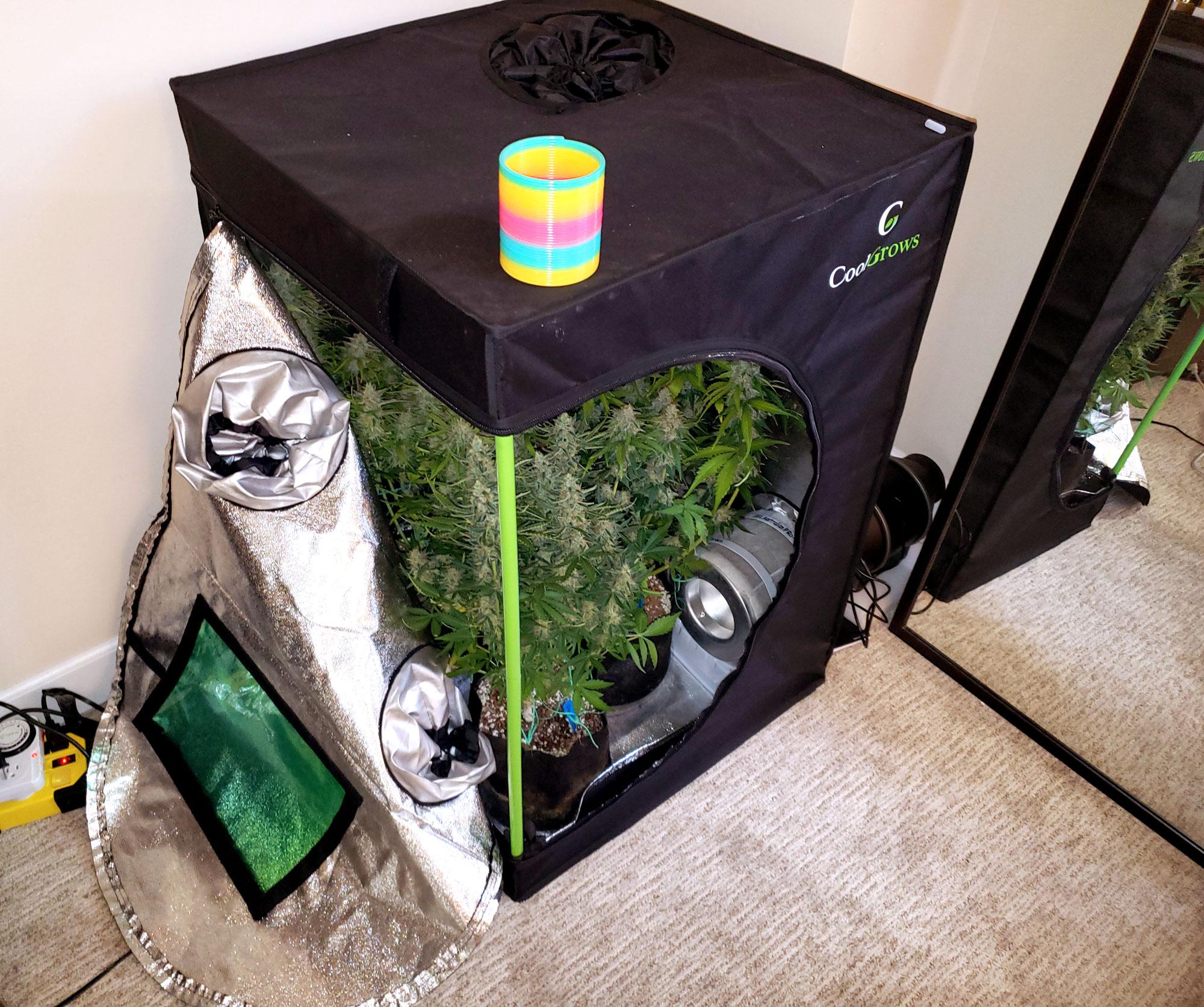 Mini Grow Tent Shopping List Amp Tutorial 100w Led Grow