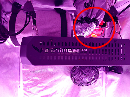 An elide fire extinguishing ball installed in a grow tent