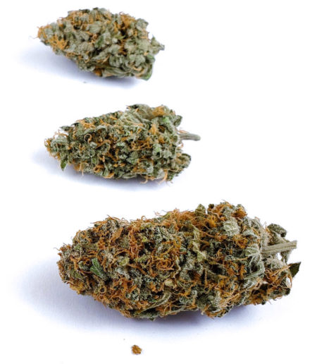 Closeup of buds from Cinderella Jack autoflowering plant
