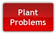 Pot plant problems? This page will help you diagnose your sick cannabis plants and get the fix!