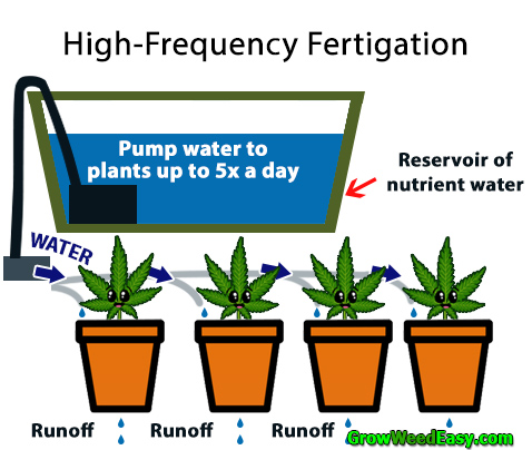 High-frequency fertigation diagram for growing cannabis plants by GrowWeedEasy.com